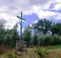 """La Croce posta in località """"Il Monte"""""""
