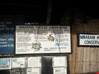 visita alle tartarughe