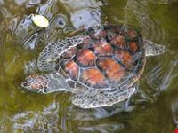 tartarughe del centro