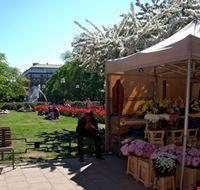 Il parco di Mariatorget