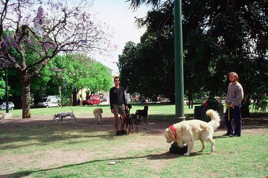 dogs sitter buenos aires