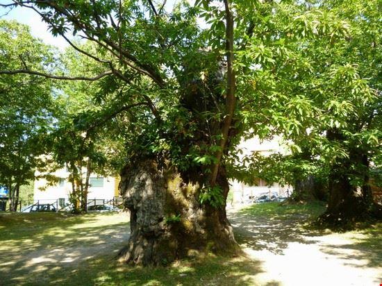 Parco dei castagni