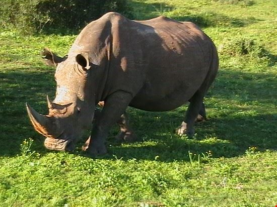 Rhino at the Addo Elephant Park