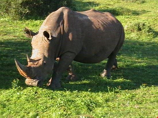 Rhino at the Addo Elephant Park