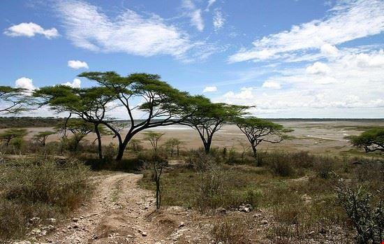 arusha serengeti