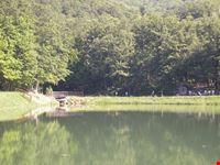 lago 7