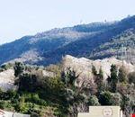 Alle pendici del Monte Faito
