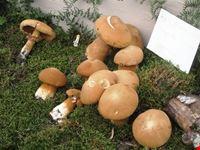 sagra dei funghi