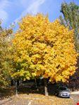 l'autunno è arrivato