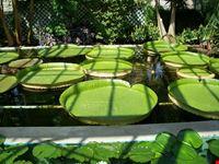 giardini di villa taranto