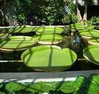 62914 verbania giardini di villa taranto