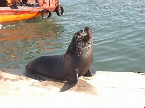 leoni marini mar del plata