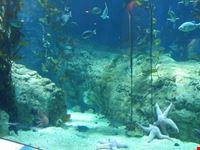acquario valencia