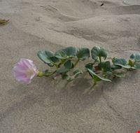 Spiaggia di giugno