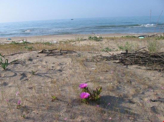 Isola Varano spiaggia in fiore