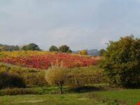 I colori d'autunno