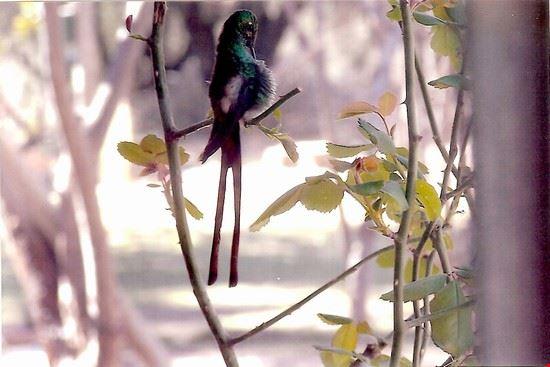 colibri mendoza