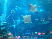 acquario nel dubai mall dubai