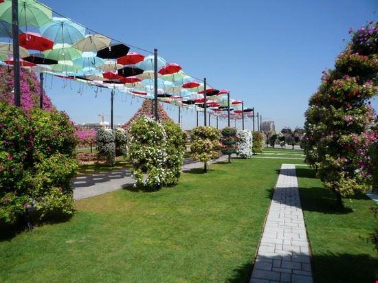 ombrelli e fiori