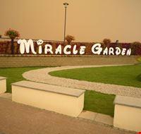 66419 miracle garden dubai
