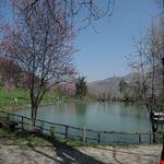 Lago dei pini