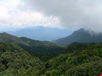 hanoi foresta tropicale