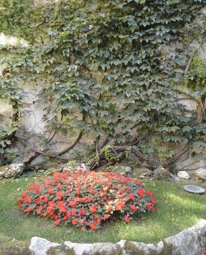 Foto decorazione floreale a ravello 412x550 autore for Decorazione floreale