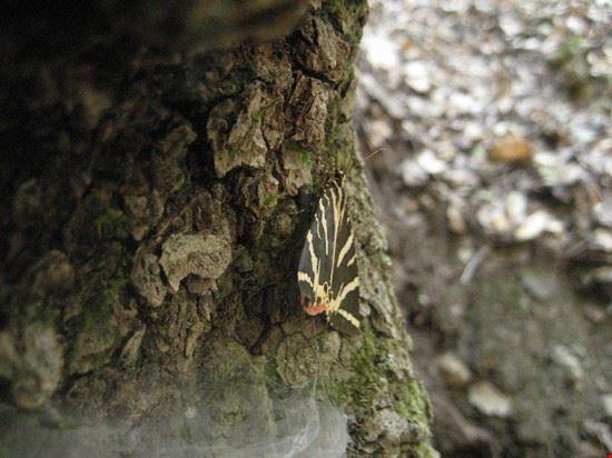 67694 rodi farfalle di petaloudes