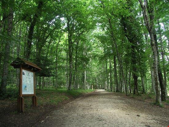 67697 vieste foresta umbra di vieste