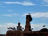 marrakech cigueenas de marrakech