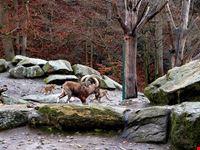 monaco zoo