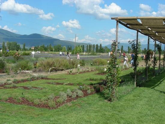 Foto giardino degli aromi il lavandeto di assisi - Il giardino dei ciliegi assisi ...