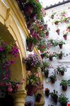 cordova vicolo dei fiori