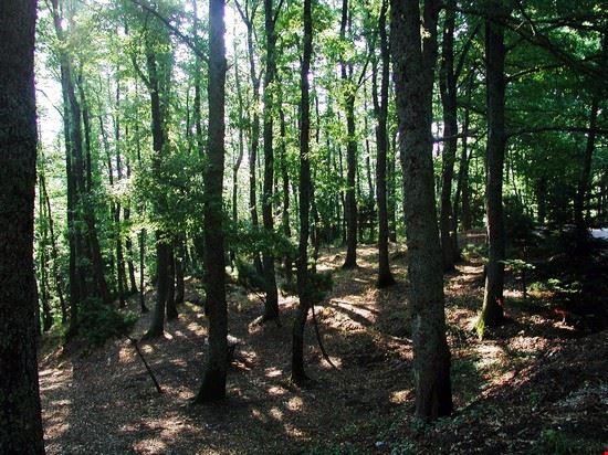 Il bosco Difesa