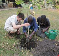 69785 kampala plant trees