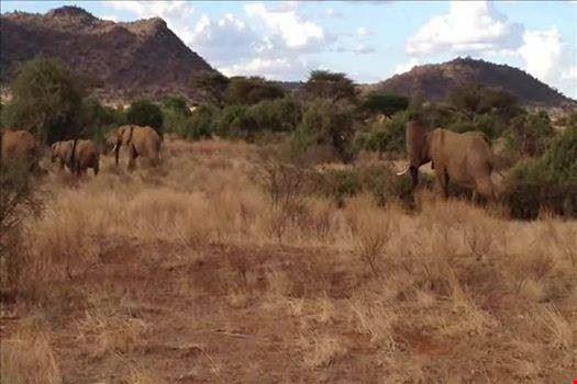 I più bei parchi naturali del Kenya e la leggendaria etnia Masai.