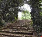 entebbe giardini botanici nazionali