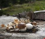 san candido funghi