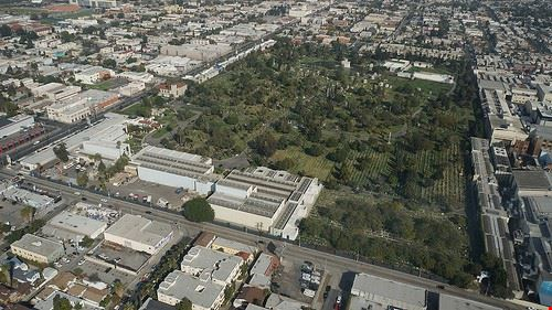 71399 los angeles hollywood forever