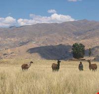 Llama Trek