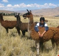 Peru Llama Trek