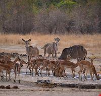 Animals at Waterhole