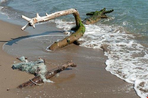 72798 grosseto il parco naturale della maremma