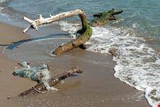 grosseto il parco naturale della maremma