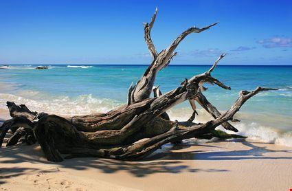 Tronchi sulla spiaggia