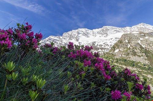 aosta parco nazionale gran paradiso