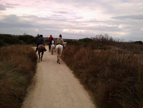 73190 volterra escursioni a cavallo