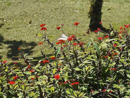 73240  giardino botanico
