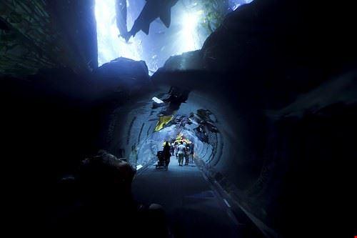 73388  aquarium