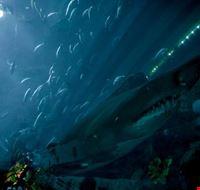 73389  aquarium
